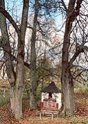 Zabytkowy drzewostan