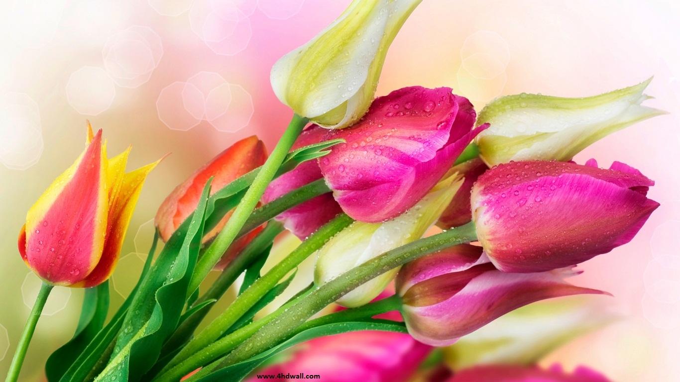 full hd tulips wallpaper