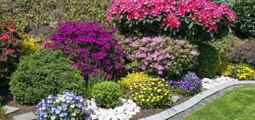 braz ogródki przydomowe